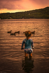 Swimming with the ducks... (Marla Nutbrown) Tags: ducks summer lake love light mountains water child little girl marlanutbrownphotography naturallightphotography childphotography childhood