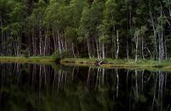 20150704-210F (m-klueber.de) Tags: 20150704210f 20150704 2015 mkbildkatalog norwegen norge norway oslo tryvann wald see birken