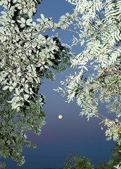 untitled (4 of 7) (Johann Kp) Tags: tallinn estonia early morning explore sunrise light flash moon sky colour colours mood moody canon 5d mk2 2470