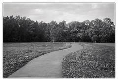 suburban park  #079 (lynnb's snaps) Tags: 2015 35mm curlcurl iiic ltm leica leicaiiic bw film park pathwaystracks 50mm rangefinder