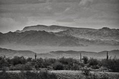 the inhospitable desert... (Alvin Harp) Tags: desert arizona cactus july 2012 sonynex5n landscape mountains monochrome blackandwhite bw nature alvinharp