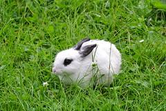 DSC_3416 (mavnjess) Tags: 15 june 2016 vicenza italy italia coniglio coniglios rabbit rabbits bunny bunnies