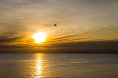 Golden sunset over Port Phillip (gifas) Tags: portphillip brighton melbourne altona seagull silhouette