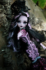 IMG_9847 (Cleo6666) Tags: draculaura collector draculaurasweet1600collectordoll monster high monsterhigh mattel deluxe deluxeedition