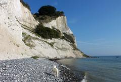 The white cliffs of Moen (and Ditte matching the cliffs!) (Ingrid0804) Tags: thewhitecliffsofmoen limestonecliffs denmark moen moensklint goldenretriever
