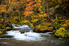 () Tags: canon 1dx ef24105mmf4lis water waterfall oirase maple tree forest river rock wave season fall color                  longexposure