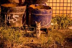 Leica D-Lux(Typ 109) (S@sabi) Tags: leicadlux(typ109) leica dlux typ109 m43 cat