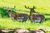 DSC_9550 (Costi Jacky) Tags: france naturereserve parcdemerlet