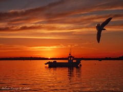 Sunset (Belinda Fewings (3 million views. Thank You)) Tags: harbour shoreline southcoastofengland endoftheday sundown september reflect reflection silhouetting silhouettes boat christchurchharbour sea dorset christchurch seagull sunset sun belindafewings panasoniclumixdmc bokeh city street seaside colour colourful artistic pbwa creativeartphotograhy creative arty beautiful beautify beauty lovely outdoors outside out best depthoffield