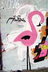 Pour les Flamands (Red Cathedral is in Osaka) Tags: sonyalpha a77markii a77 mkii alpha sony sonyslta77ii slt evf translucentmirrortechnology redcathedral graffiti streetart urbanart contemporaryart urbex belgium alittlebitofcommonsenseisagoodthing ruisbroek anderlecht brussels bruxelles tresspassing trespass pink flamingo flamands vlamingen