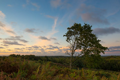 Thurstaton Common 2 - Sep16 (simonknightphotography) Tags: thurstaton wirral cheshire common sunset trees sky heather ferns