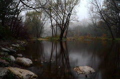 foggy day cool (anj_p) Tags: longexposure morning autumn trees ontario canada fall fog burlington creek rocks lowville bronte bfg reflecction bestcapturesaoi