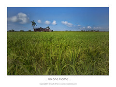 ... no one Home ... (liewwk - www.liewwkphoto.com) Tags: blue sky house green field canon big rice paddy lee malaysia areas kampung filters  rumah selangor stopper mii producing mark2 9s gnd 1635l sekinchan leefilter graduatedneutraldensity  liewwk httpliewwkmacroblogspotcom wwwliewwkphotocom  5dmark3 wwwliewwkphotocomblog canon5dm3  malayvillagehouse