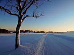 On the way (zahn-i) Tags: road blue schnee winter snow alps tree bayern bavaria day strasse bmw alpen blau baum 1er 2012 obstbaum f20 voralpen