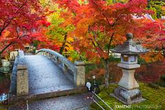 和楓 Japanese Maple / Kyoto, Japan (yameme) Tags: travel japan canon eos maple kyoto 京都 日本 kansai 旅行 關西 楓葉 eikando 石燈籠 永觀堂 24105mmlis 5d3 5dmarkiii