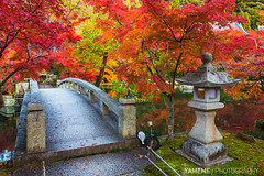 Japanese Maple / Kyoto, Japan (yameme) Tags: travel japan canon eos maple kyoto   kansai    eikando   24105mmlis 5d3 5dmarkiii