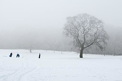 Children Playing in the Snow - Camperdown Park Dundee Scotland (Magdalen Green Photography) Tags: tree scotland cool pretty moody dundee christmastime winterscene camperdownpark childrenplayinginthesnow scottishwinter iaingordon magdalengreenphotography