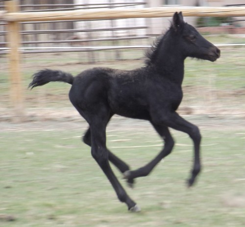 Little Whinny gallop