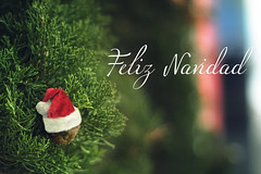 Feliz Navidad (Juanedc) Tags: christmas xmas red espaa tree verde green hat arbol navidad spain rojo gorro zaragoza aragon sombrero es bonnet saragossa feliznavidad merrychirstmas
