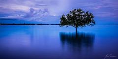 Blue Reflections (Explored) (Nolan Caldwell) Tags: blue sunset cloud nikon dusk nt australia hour coastline mangroves eastpoint topend beachcoast the4elements thetopend d800e