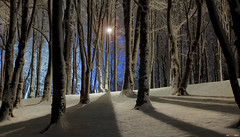 Light create shadows.... (bent inge) Tags: winter light snow norway forest stavanger norge vinter shadows skog lightpole 2012 sn rogaland vland vlandskogen bentingeask askphoto