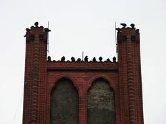 Pigeons (Steys) Tags: city november autumn urban berlin birds germany deutschland grey herbst himmel grau vögel rathaus dach doves 2012 steglitz tauben depressive spitze schiefer bewölkt depressiv zugemauert guessedberlin gwbthomaslautenschlag