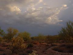soft desert light (desert native) Tags: summer arizona cactus southwest clouds july az basin swells sonorandesert desertlandscape cholla eveninglight softlight desertplant arizonadesert chainfruitcholla 2011 deserttree rainwaterharvesting milagroland milagrocohousing
