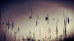 Fisherscape © (Blackcatatheart) Tags: ocean park lighting light shadow sea lake reflection reed nature reeds outdoors reflecting pond open outdoor space reflected reflect swamp bent shape preserve vastness reflects vast