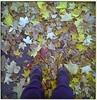 IMG-20121012-09151-pola01 (Su℮ ❥) Tags: park love leaf flickr edited shows crunch fauxlomo imissyou