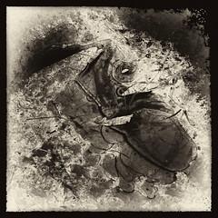 Childhood Memory (b&w ver.) (Krogen) Tags: bw nature norway norge blackwhite natur norwegen noruega scandinavia krogen noorwegen noreg skandinavia svarthvitt oppland svhv nordreland silverefexpro olympusep2 tvisyn