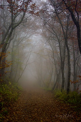 Craggy Gardens (oennovy) Tags: trees mist mountains nature misty fog forest north carolina paths