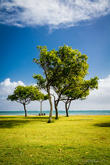 Wonderful Light (Daniel Ladenhauf) Tags: park trees light beach grass hawaii oahu lawn kualoa kualoaregionalpark