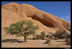 Tree at the foot of the rock (Dan Wiklund) Tags: africa shadow summer orange tree nature rock stone landscape bush sand warm desert natural namibia d800 spitzkoppe southernafrica 2013