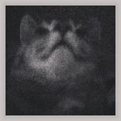 #cat #scan (ChestnyStarik) Tags: square willow squareformat iphoneography instagramapp uploaded:by=instagram