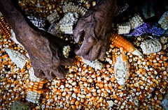Corn of the Mayas, San Juan La Laguna, Guatemala. (eriktorner) Tags: old woman hands maya guatemala sanjuan atitlan mayan maize sanpedro sanpedrolalaguna sanjuanlalaguna fotoeriktrner eriktornernu