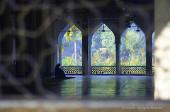And he prays (Mukammel Hoque) Tags: life trees light shadow flower green window nature silhouette garden way photography fan focus asia heaven day alone peace shine god muslim islam prayer pray praying innocent mosque frame lonely dhaka ramadan bangladesh bengali beauti forgive