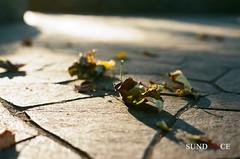 (Sundance = ) Tags: street light sunlight color film leaves japan colorful olympus  nippon yokohama om1 2012    sundancelee  efiniti uxi200 sundannce