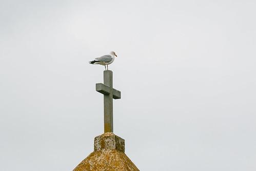 Goéland sur la croix du Rocher de la Sentinelle
