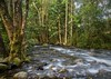 Mossman River 6 (stevo850) Tags: pastfeaturedwinner rockpaper