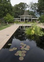 DSC02477_ep (Eric.Parker) Tags: august 2016 rbg royalbotanicalgardens burlington lily lilypad lotus pond flower teahouse