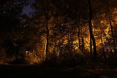 Den Haag - Sportlaan (merijnloeve) Tags: den haag sportlaan bosjes van pex kijkduin nederland long exposure lange sluitertijd nacht woods night nights nightshot n
