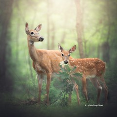 A mother's love (_wonderemporium) Tags: sunset green tree wildlife deer outdoors flowers art light dof landscape summer new yellow forest woods trees warmth