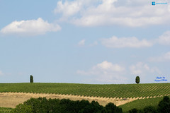 Val D Orcia (P.Ebner) Tags: toscana landscape panorama valdorcia val orcia paesaggio italia italy tuscany tree albero green verde nature natura