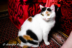 Fuzzy emilia (Bernsteindrache7) Tags: color cat katze animal indoor home house pet panasonic lumix red