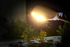 Chasing the Sun? (Andreas Kuehntopf) Tags: flies lamp post light long time exposure langzeitbelichtung night