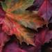 Fall+Foliage