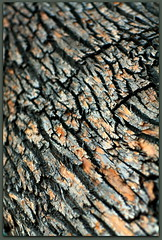 LDLO Texture/Pattern (ctofcsco) Tags: ldlo 1125 35 5d 5dclassic 5dmark1 5dmarki 85mm black brown canon colorado coloradosprings ef85mm ef85mmf12lusm eos5d explore f35 gray labordayliftoff pattern texture treebark unitedstates usa 2015 balloon balloons city co crowd crowded crowds event explored festival fun geo:lat=3882831660 geo:lon=10479891560 geotagged happy hotair hotairballoon knobhill landscape memorialpark northamerica party prospectlake abstract outdoor esplora