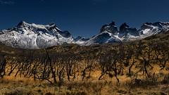 Moonlight II (impodi@gmail.com) Tags: luzdeluna moonlight nocturna paisaje landscape chile torresdelpaine paine cuernosdelpaine patagonia