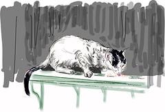 Tom cat (Isaszas) Tags: cat drawing dessinvectoriel tomcat straycat rubbish waste feeding affam dessinpourlesassociations chat chaterrant nourriture ordures dchets mhltonne zeichnung