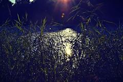 Shine On You Crazy Diamond (anvelvet) Tags: croatia mura shine sunset sun nature water pinkfloyd music